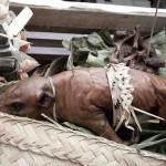 Babi Guling - Balinese sucking pig-7