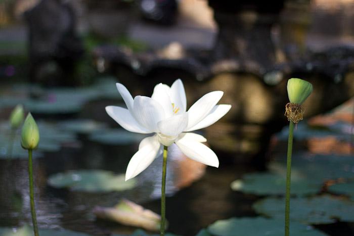 Lotus Seeds Worldfoodist