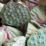 Basket full of lotus flower heads with seeds.