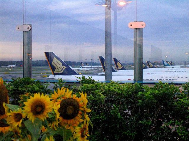 11 Reasons Changi Airport Rocks