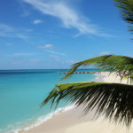 Palm and white sands in Montego Bay, Jamaica.